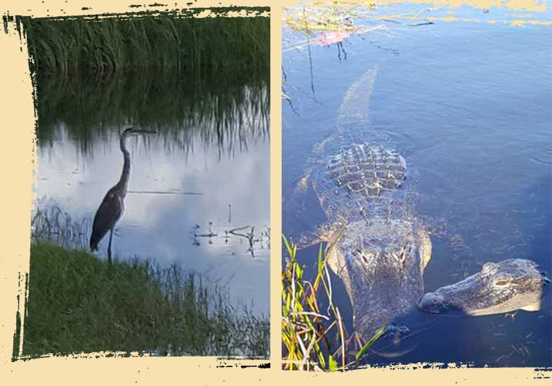 airboat ride tours